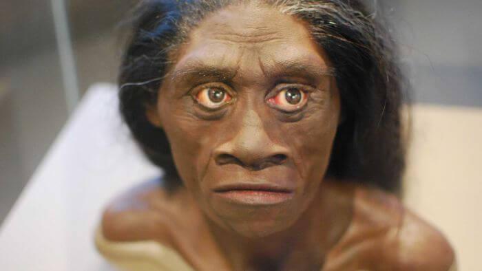 Manusia purba Homo Florensis