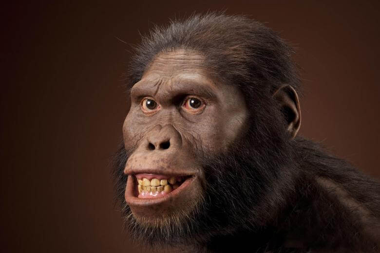 Manusia Purba Australopithecus Africanus
