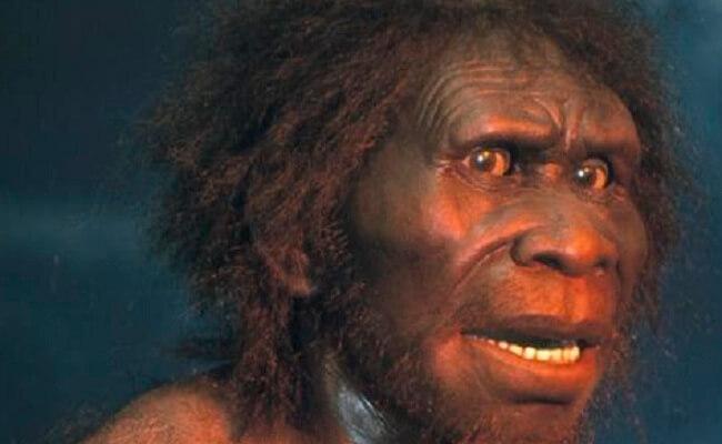 Manusia Purba Sinanthropus Pekinensis