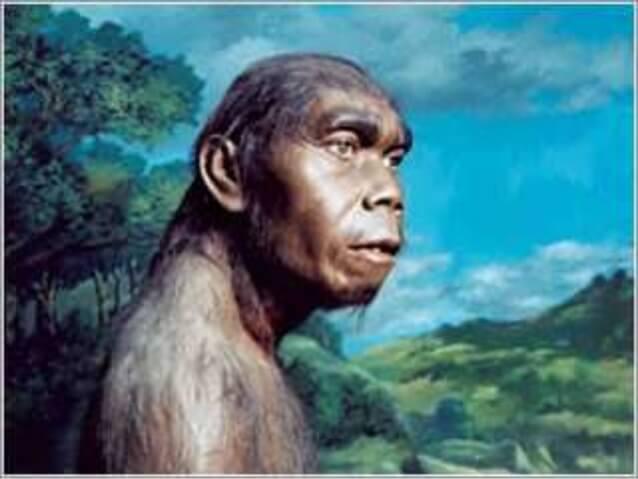 Manusia purba Meganthropus Paleojavanicus