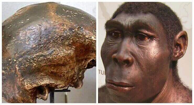 Manusia purba Pithecanthropus Soloensis