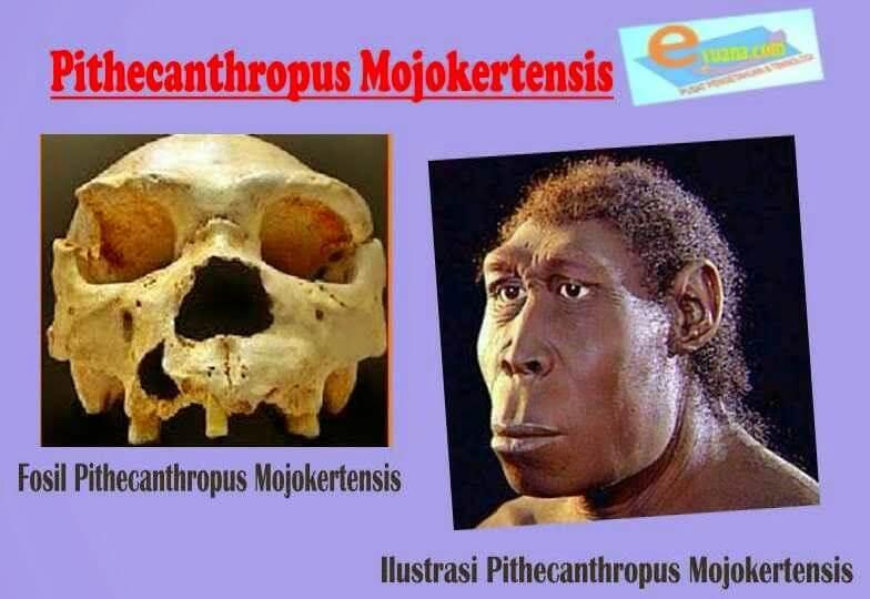 Manusia purba Pithecanthropus Mojokertensis