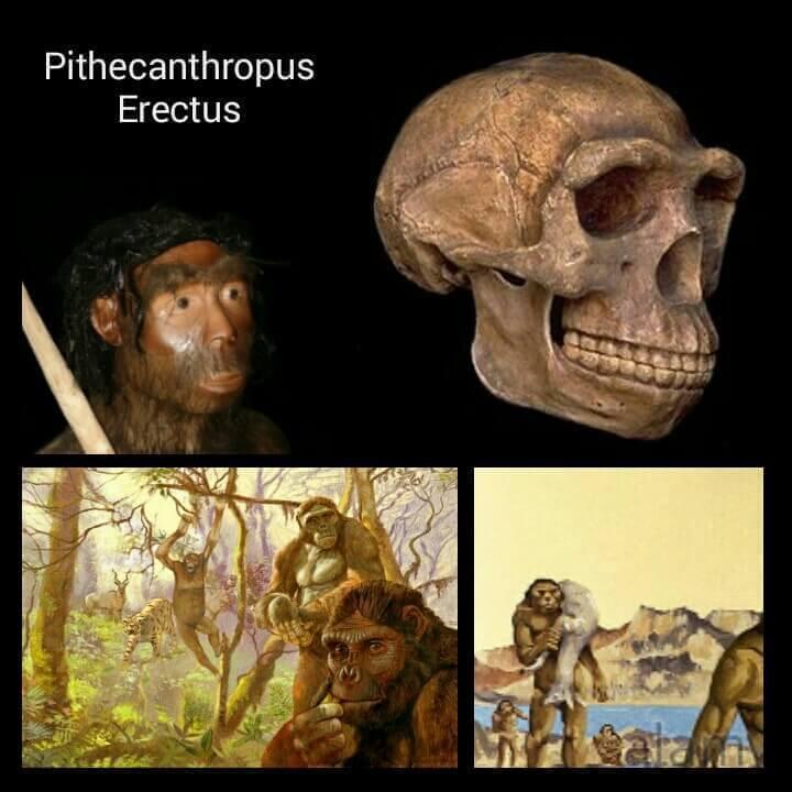 Manusia purba Pithecanthropus Erectus
