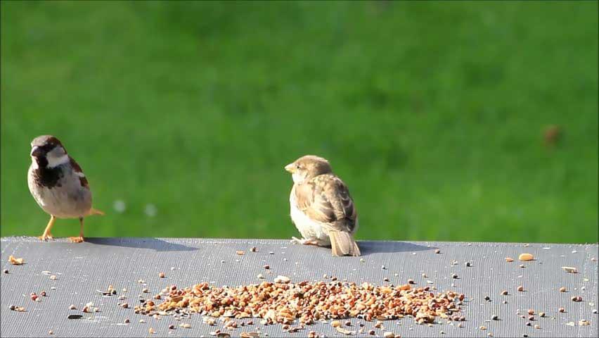 Bird eat the seeds